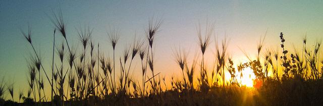 Sunset Fields at Hauli Huvila
